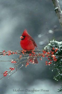 I wish Oregon had Cardinals. They are so beautiful!