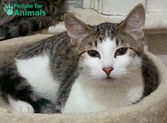 People For Animals Pet Archive: Wrex