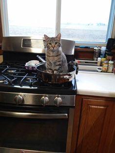 "awwww-cute: ""Not what I planned on having for dinner """