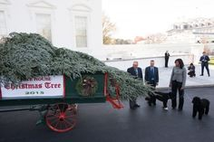 First Lady Michelle Obama and the First Family pets, Sunny and Bo, were on hand for the arrival of the 2015 White House Christmas Tree's arrival. Growers Jay and Glenn Bustard presented the tree to the first lady. It will be put up and on display in the Blue Room.