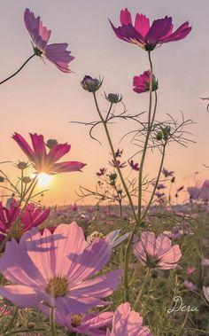 Slika može sadržavati: cvijet, biljka, nebo, na otvorenom i priroda Wallpaper Nature Flowers, Beautiful Flowers Wallpapers, Flower Phone Wallpaper, Beautiful Nature Wallpaper, Flower Backgrounds, Pretty Wallpapers, Flowers Nature, Beautiful Landscapes, Wallpaper Art