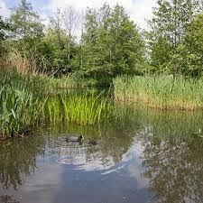 Resultado de imagen de camley street natural park