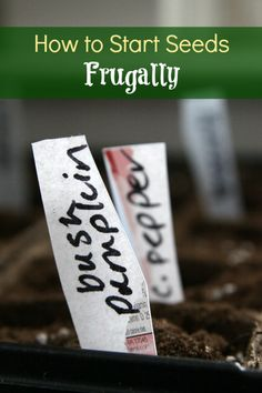 How to Start Seeds Frugally - Starting seeds is a great activity for kids in the garden.