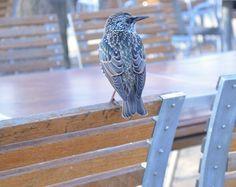 November 2012 Paris Trip - It's a Paris Bird :).