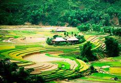 Voyage au Vietnam et Sapa
