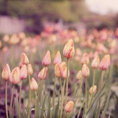garden. by KAtika