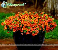 24 Colores semillas de Petunia, encanto Petunia semillas de Flores, Petunia semilla en maceta, Bonsai flor balcón-100 unids/bolsa