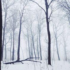 WEBSTA @ edgy_frog - Снова туман, много тумана) #vscocam #vsco #vscorussia #fog #foggy #mist #woods