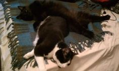 Numbering the Stars: Cat Pillows