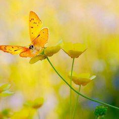 Morning's glory - #yellow - ☮k☮