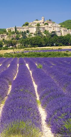 Lavender fields in Banon, village du Luberon, Vaucluse, Provence Avignon France, Provence France, Paris France, Best Vacation Destinations, Best Vacations, Lavender Fields, Lavander, Belle France, Beaux Villages