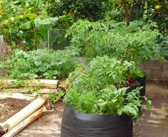 Planting food crops can sustain your family, save on groceries, & help you maintain a healthier diet. Starting a garden in your backyard is easy - and fun! Small Vegetable Gardens, Small Space Gardening, Garden Spaces, Small Gardens, Garden Beds, Outdoor Gardens, Vegetable Gardening, Agriculture, Farming