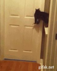Clever Cat opens door to let flood of friends come in to party! ; ) (via Jenel Love - Google+ by gifak.net)