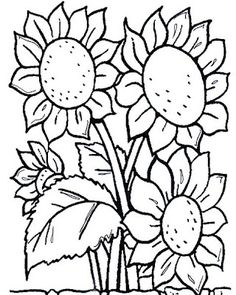 sunflowers color page flowers coloring pages color plate coloring - Coloring Page Of Flowers