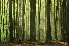 Fairy Forest - Fototapeter - Photowall
