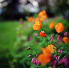 in love with ektar by manyfires, via Flickr
