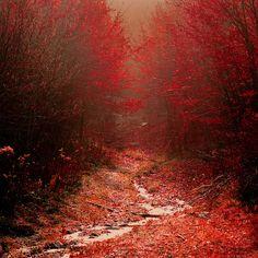 sayoneword:  Red Hued by Brett Jordan
