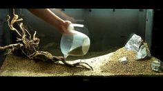 Aquarium Setup - Aquascape - Step by Step and Final Product - Live Planted Fish Tank, via YouTube.