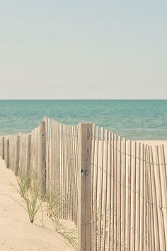Sea Oat Plantings And Beach Erosion~ Fencing For Revitalization & Widespread After A Major Hurricane