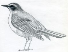 AmbiWeb: Cómo dibujar pájaros