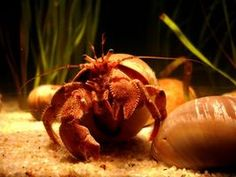 How to Make a Climbing Net for Hermit Crabs thumbnail