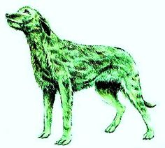Banffshire green dog- Scotland legend: a green ghost dog that when seen brings storms, famine, and death. However, it has never been seen harming anyone physically. It actually appears oblivious to the person seeing it.