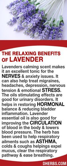 Lavenders calming scent makes it an excellent tonic for the nerves & anxiety issues. It can also help treat migraines, headaches, depression, nervous tension & emotional stress. Good for urinary disorders & helps in restoring hormonal balance & reducing bladder inflammation. Lavender oil helps improve circulation in the body & lowers blood pressure. The herb has been used to help respiratory ailments such as asthma, colds & coughs helpings expel mucus & ease breathing. #dherbs