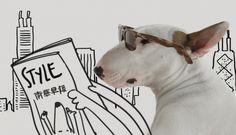 Exclusive illustration by Brazilian illustrator Rafael Mantess featuring his bull terrier Jimmy Choo- a social media sensation.