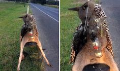 A KANGAROO dressed in leopard-print was found shot dead tied to a chair, sparking outrage across Australia.