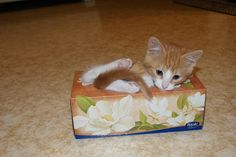 No more tissues. When you're sad, cuddle with a kitty! I Love Cats, Crazy Cats, Cute Cats, Funny Cats, Pretty Cats, Beautiful Cats, Pretty Kitty, Happy Animals, Cute Animals