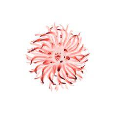 #iPadAir2 #iPadwallpaper #flower from default #iOS8