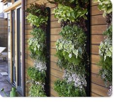 Living wall, I will have one of these one day.  They are soooo awesome and pretty and lovely!