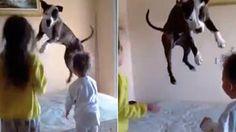 I bambini saltano sul letto, il cane li imita e si diverte