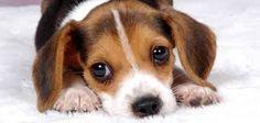 Resultado de imagem para IMAGENS cachorros