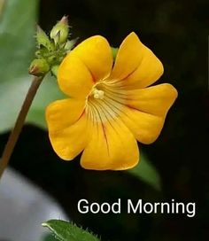 Good Morning Flowers Pictures, Good Morning Friends Images, Good Morning Dear Friend, Good Morning Happy Sunday, Good Morning Beautiful Images, Good Morning Picture, Morning Pictures, Good Morning Coffee Gif, Good Morning Roses