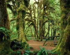 Green-Forest-Wallpaper-green-20036585-1280-1024.jpg 1,280×1,024 pixels