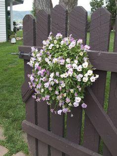 Flowers on gate.