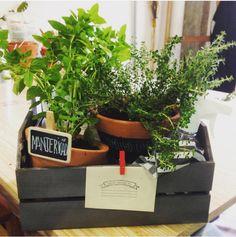 Priscilla Portugal — Sua própria horta!