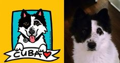 Anne Leuck Feldhaus Studio's photo. Border Collie / Akita Mix: Cuba! Custom Pet Portraits: http://Annesart.com