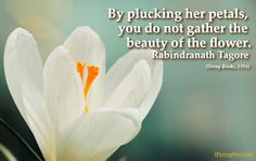 Rabindranath Tagore Quote: By plucking her petals you do not...