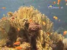 Excursions4all.com. Snorkeling at Tiran Island By Boat Full Day