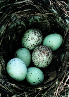 ≗ Feathered Nest of Hope ≗ bird feather & nest art jewelry & decor - Blue eggs in the nest
