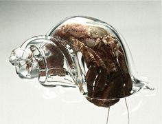 Cangrejo ermitaño en concha de cristal