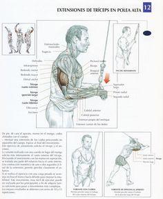 lamina-de-extensiones-de-triceps-en-polea-alta.jpg (665×817)