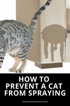 Tips For Stopping Cat Spraying cat spraying stop Remove Cat Urine Smell, Cat Pee Smell, Cat Urine Smells, Stop Cats From Peeing, Cat Peeing In House, Cat Urine Remover, Pet Urine, Male Cat Spraying, Cat Diseases