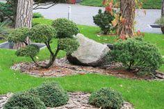 Ландшафтный сад в Горках 2 - ARCADIA GARDEN Landscape studio Rock Garden Design, Japanese Garden Design, Arcadia Garden, Topiary, Bonsai, Garden Landscaping, Stepping Stones, Landscape Design, Creative