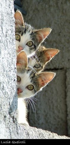 Curious Cuties