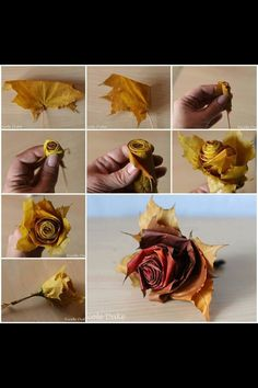 Amazing leaf rose. (I can't find where I originally found this, I did not come up with the idea)