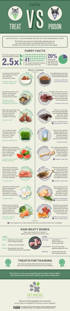 An infographic for what cats can & can't eat