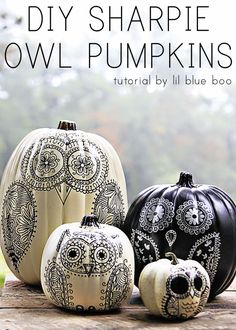 How to Make Sharpie Owl Pumpkins | Ashley Hackshaw / Lil Blue Boo